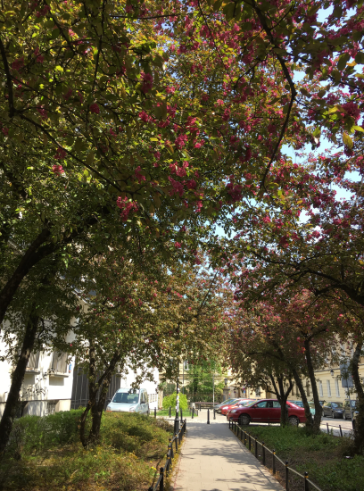 Gracious streets in bloom
