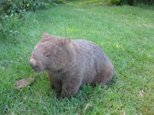 Wombat Central
